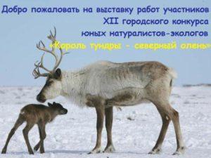 10-12-2016vystavka-korol-tundry-severnyj-olen-11